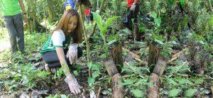 Phoenix Petroleum participates in planting trees